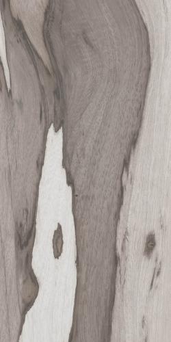 savana-min-tuaregB9A06B24-A32F-3369-53B1-BE30A0CB87EB.jpg